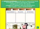 Los animales invertebrados | Recurso educativo 47493
