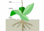 Plant diagram | Recurso educativo 55214