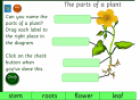The parts of a plant | Recurso educativo 25652