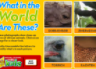 Mystery animals | Recurso educativo 73404