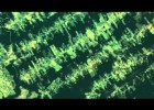 Amazon Deforestation: Timelapse | Recurso educativo 744814