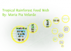 Tropical Rainforest Food Web | Recurso educativo 749972