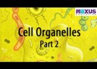 Cell Organelles- Part 2 | Recurso educativo 760583