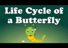 Life Cycle of a Butterfly | Recurso educativo 768815
