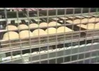 The industrial bread process: an overview for children | Recurso educativo 768857