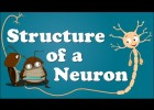 Structure of a Neuron | Recurso educativo 774344