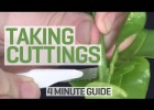 How To Take Cuttings | Recurso educativo 777783