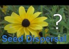 Seed dispersal | Recurso educativo 777804